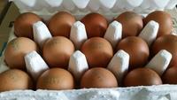 락앤락 스페셜 계란 보관용기 18구 + EGGMAN PREMIUM 15구 X 2팩