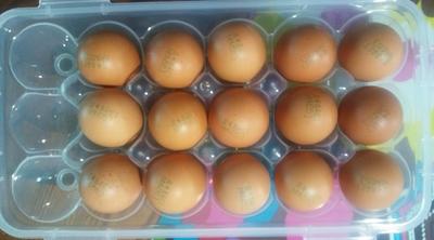 계란을 신선하게 보관할 수 있어서 좋아요!!