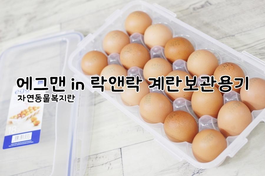 자연동물복지란 에그맨 in 락앤락 계란보관용기