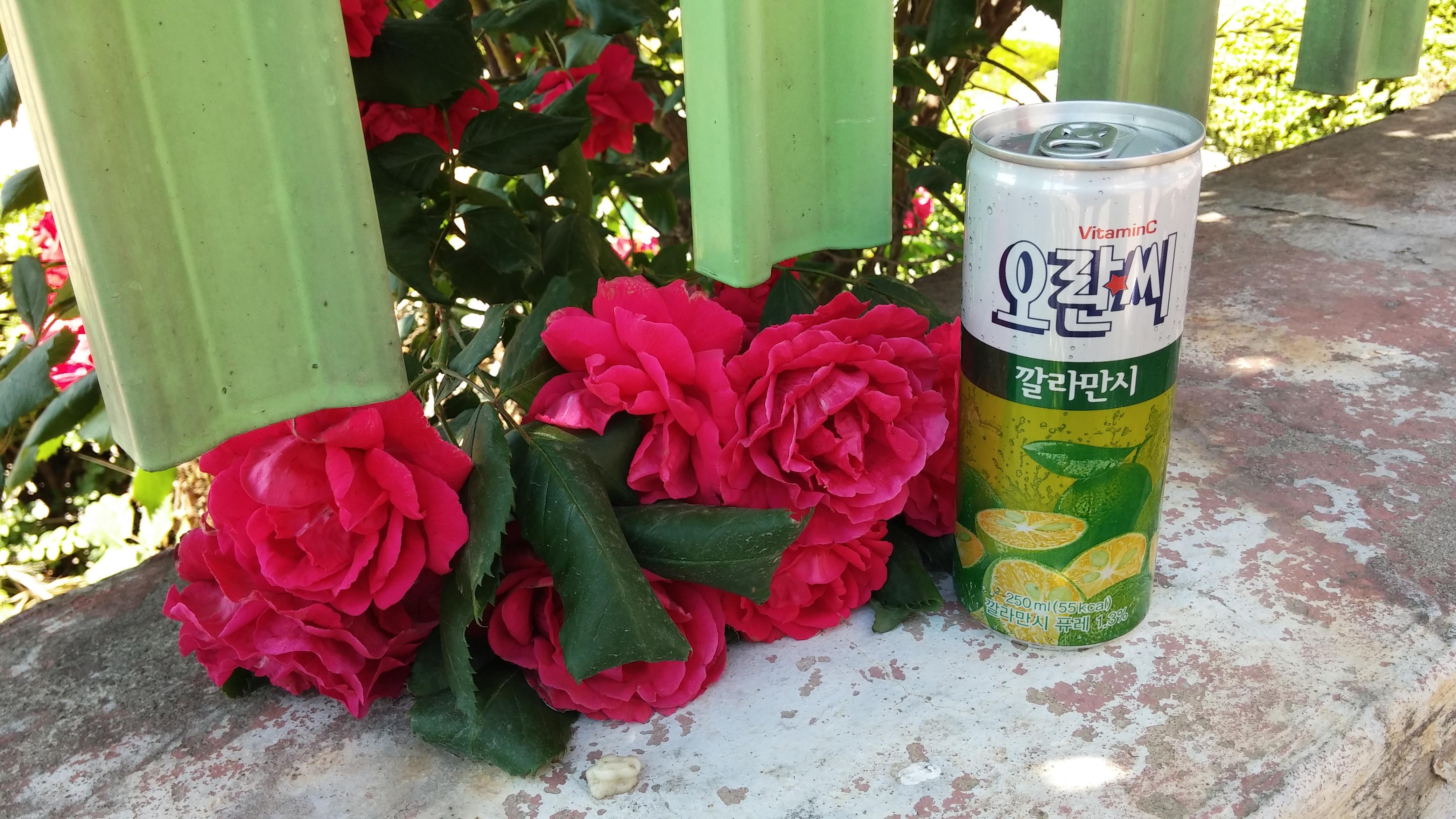 <락앤락써포터즈 체험단> 동아오츠카 천연과즙 비타민 오란씨 깔라만시~