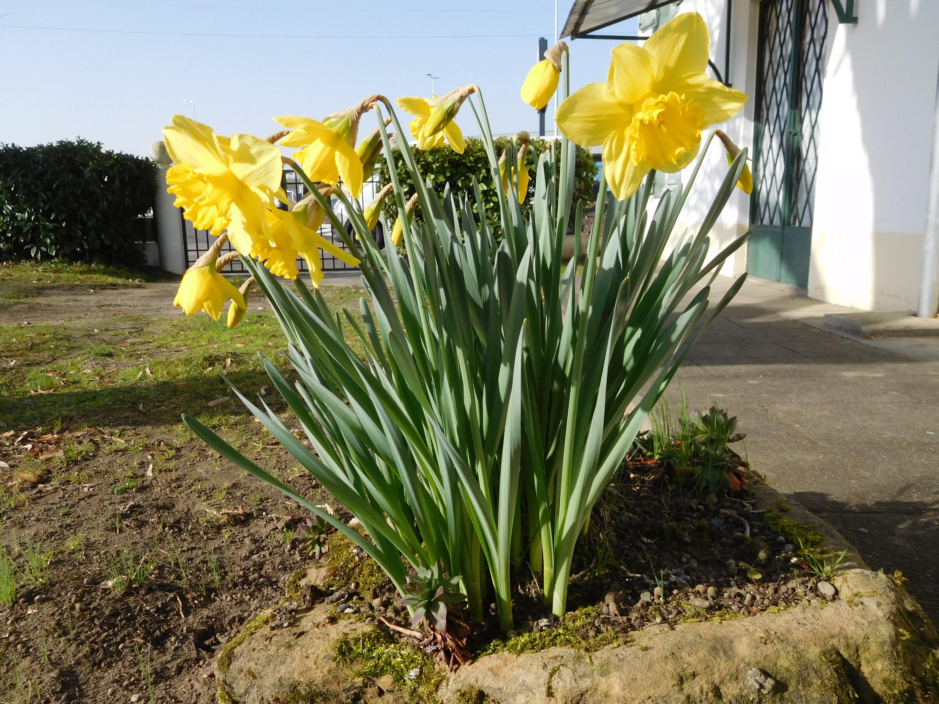 봄,봄,봄, 봄이 왔어요~
